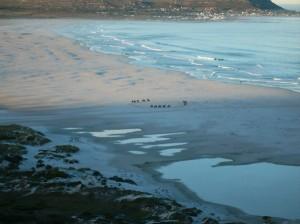nh beach horses